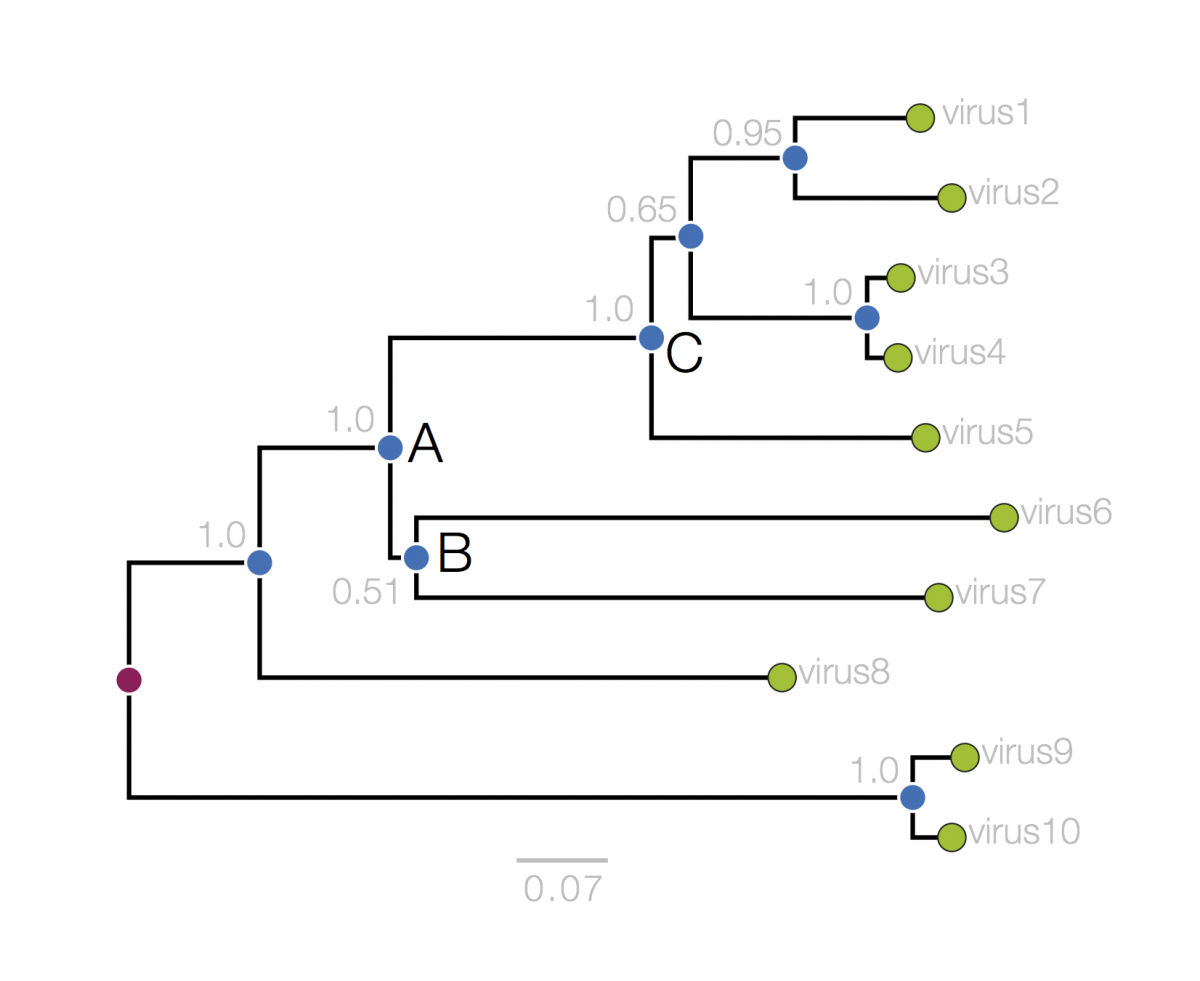 Of tree phylogenetic parts a 20.1: Organizing